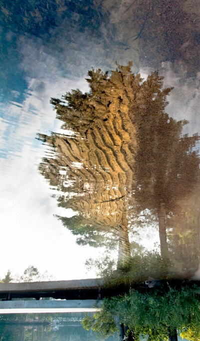 Dream Tree, David Goorevitch, Awe and then some, aweandthensome, aweandthensomephotography, aweanthensome blog, art photography, Toronto, Toronto photographers, Toronto photography, Toronto for Photographers, Private Photography lessons, Private photography lessons Toronto, Toronto photography lessons,