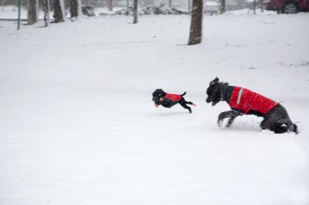 EMandB_in snow