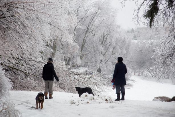 Ice Storm, awe, Toronto, blocked path, winter, David Goorevitch, aweandthensome