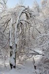 Cedarvale, awe&thensome, aweandthensome, aweandthensome photography, David Goorevitch, art photography, ice storm, toronto