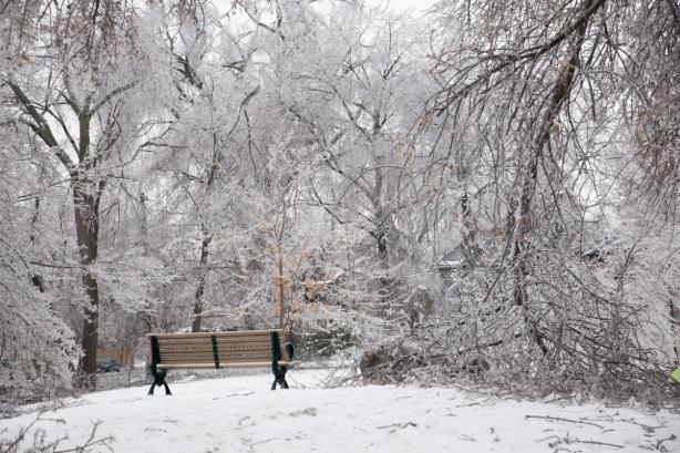 Ice Storm, awe, Toronto, David Goorevitch, aweandthensome, maple leaf