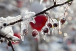 awe&thensome, aweandthensome, aweandthensome photography, David Goorevitch, art photography, ice storm, toronto