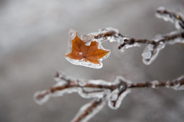 Ice Storm, awe, Toronto, David Goorevitch, aweandthensome