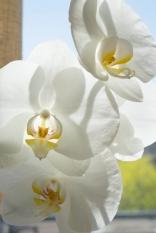 White on White_01308_sm